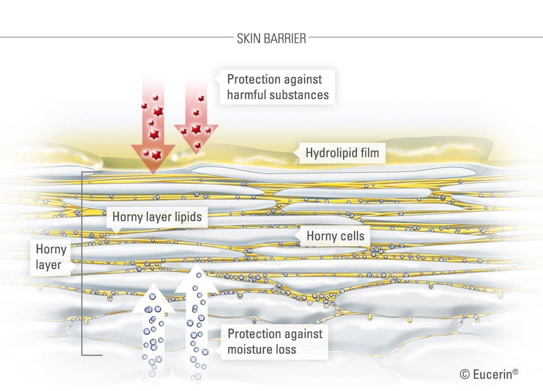 Graphic illustration of skins horny layer.